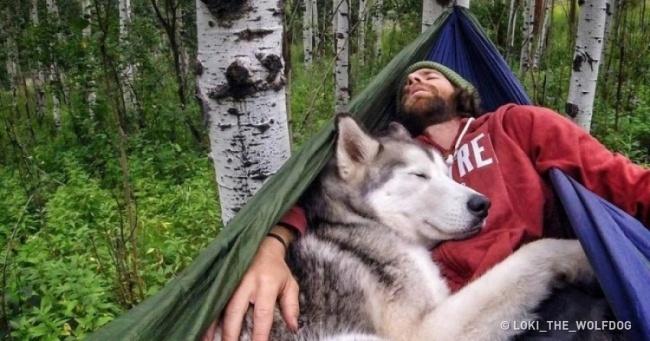 Sadık Dostlarımız Köpeklerden Kalbimizi Isıtacak 20 Fotoğraf