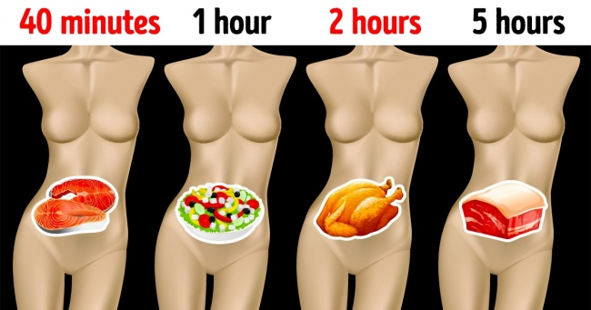 Farklı Yiyeceklerin Sindirimi Ne Kadar Sürer ve Bunu Bilmek Neden Önemli?