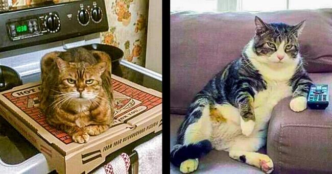 Kedilerin Gerçek Bir Gıcık Olabileceğini Kanıtlayan 22 Fotoğraf