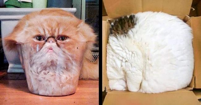 Kedilerin Her Yere Sığabileceğini Kanıtlayan 23 Fotoğraf